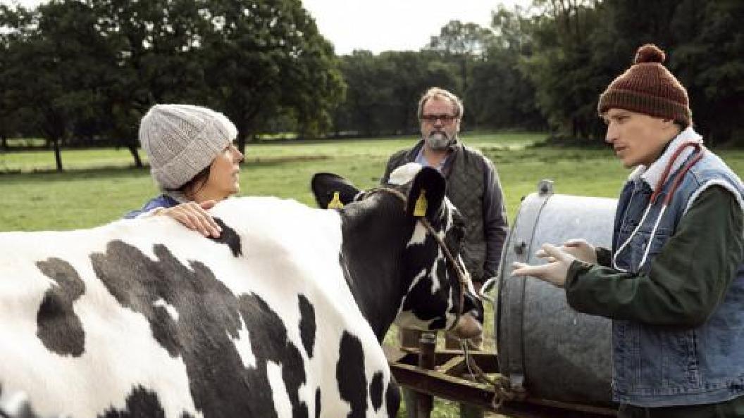 Viele Kühe und ein schwarzes Schaf